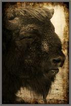 Bison (serie)