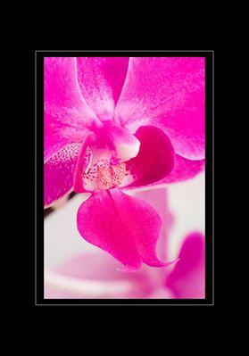bissl orchidee...