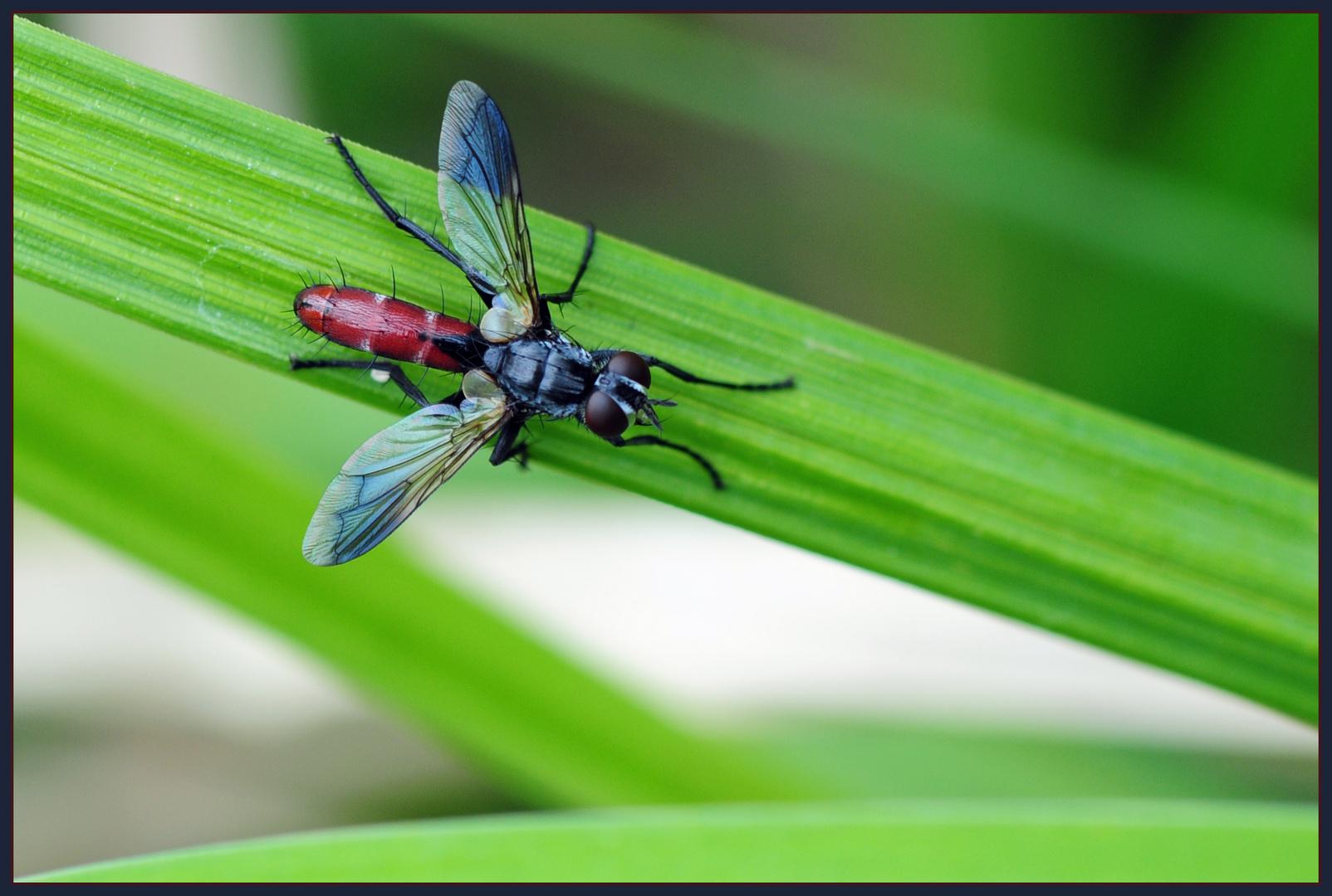 ?... Bist Du eine Fliege ...?