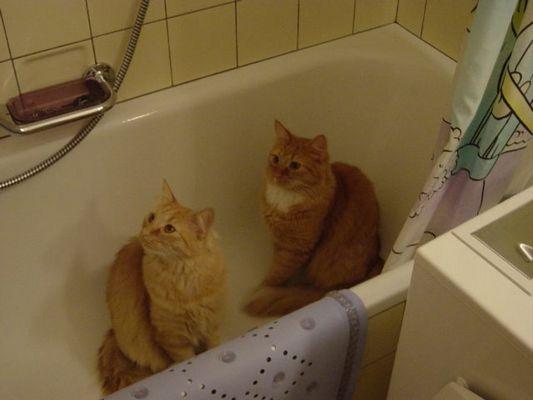 Bitte Duschen