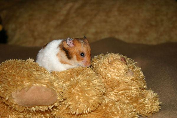 Bitte nimmt mir nicht meinen Teddy weg!!