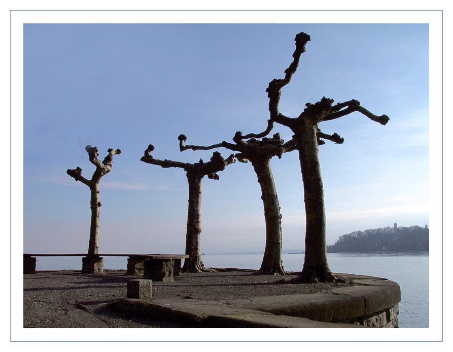 Bizarre Bäume am Wasser