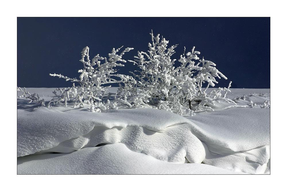 bizarre Winterlandschaft II