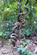 bizarrer Baum im Wald bei Saigon