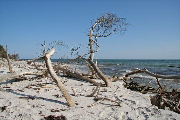 Bizarres Holz am Strand von Dueodde