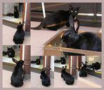 black beauties auf balkonien ;-)