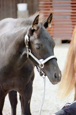 Black Beauty :-)