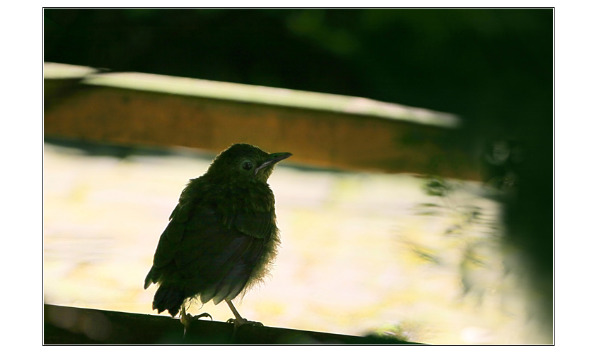 Black Bird singing in the dead of night....second version