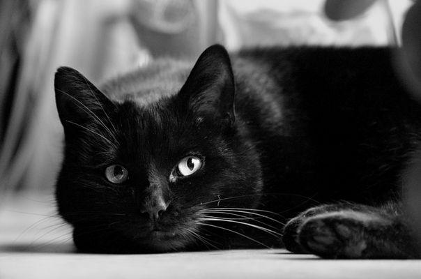 ° black cat °