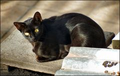 Black cat of the roofs