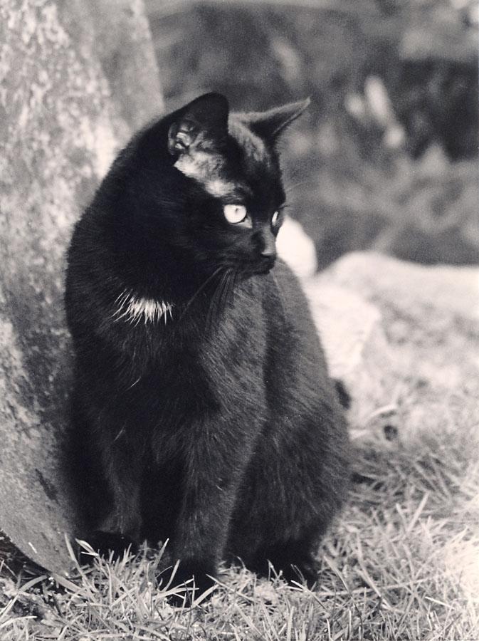 black cats don´t need colour prints