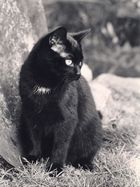 black cats don´t need colour prints
