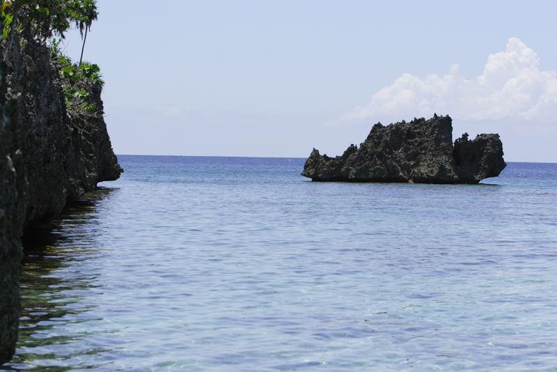 Black Coral Reef