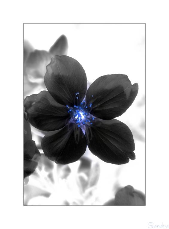 ~ black flower ~
