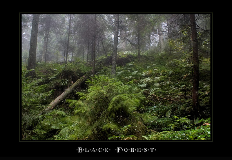 """ Black Forest """