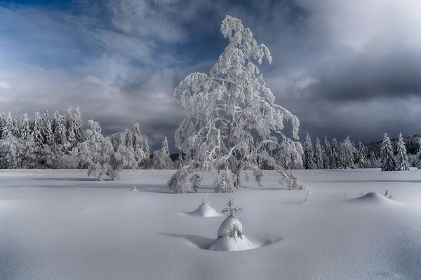 Black Forest Winter Magic