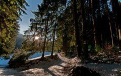 black forest.weggabelung2