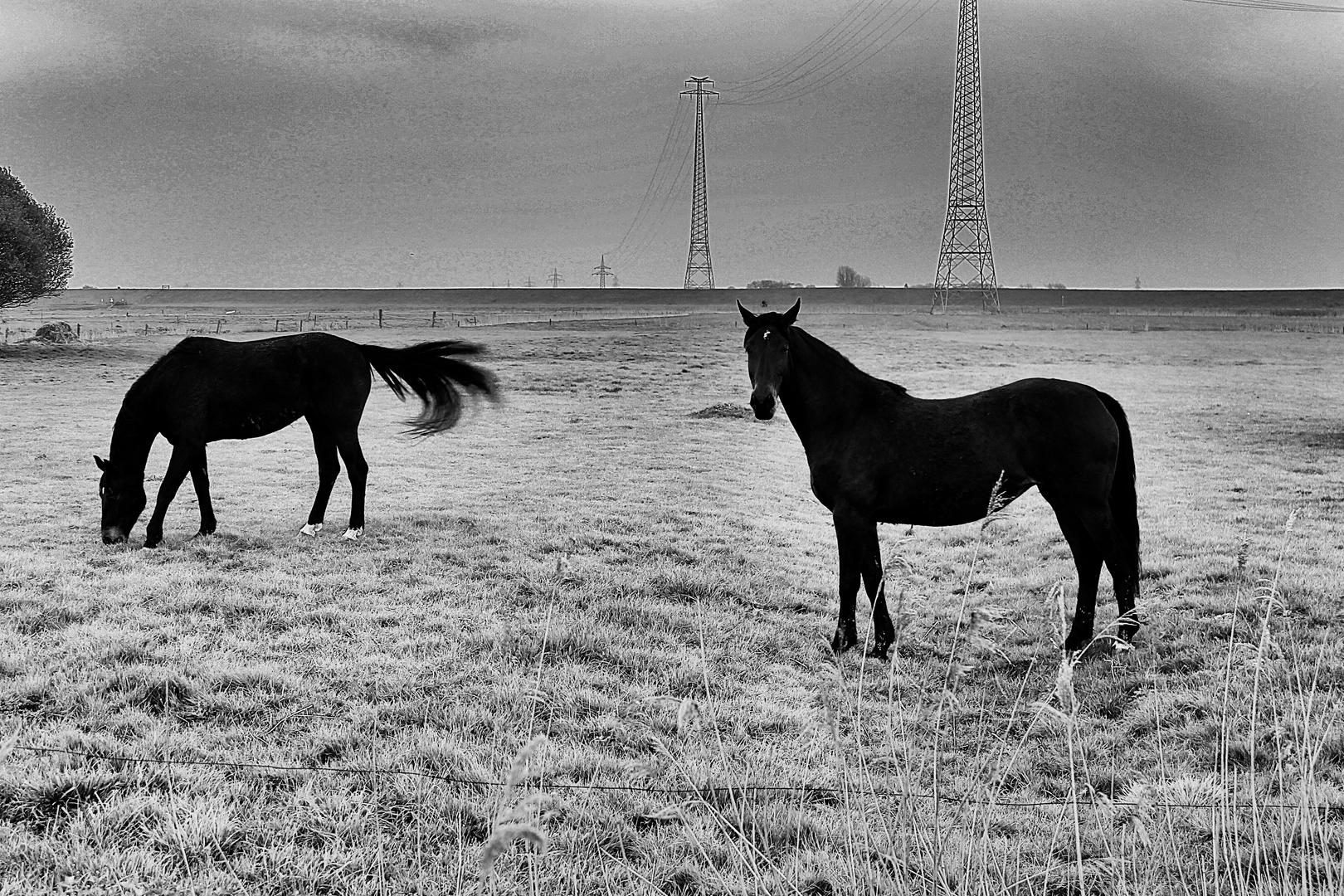 Black Ghost Horses
