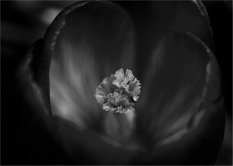 Black ist Beautiful