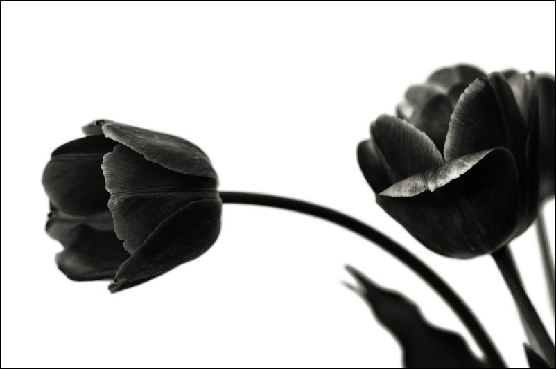 black liz