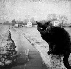 + black panther +