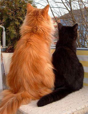 Black und Coon