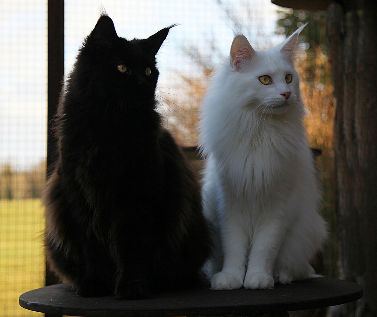 ***black & white***