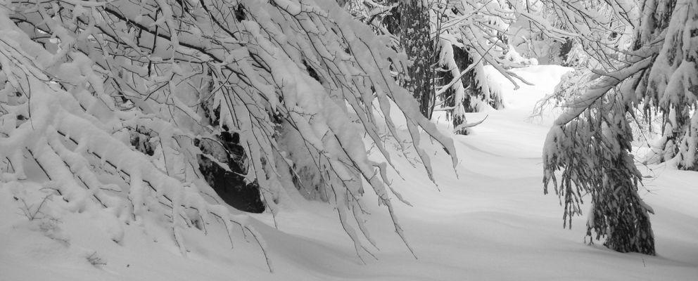 Blackforest feat. snow white
