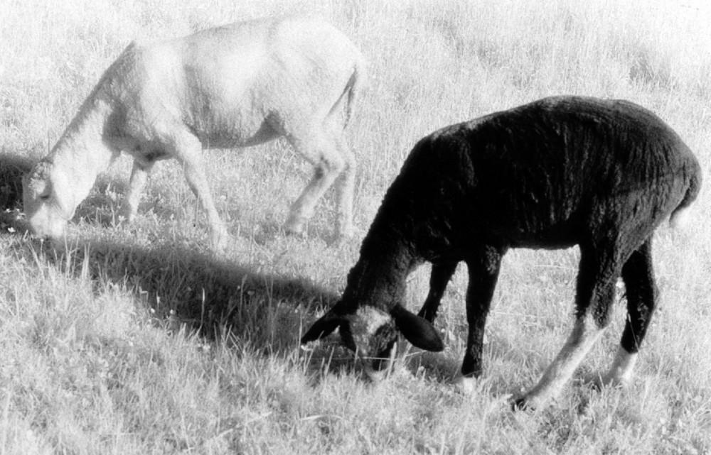 black&white Infrared