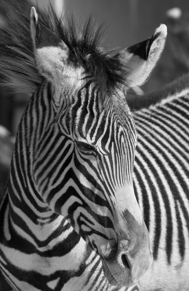 Black&White3