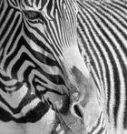 Black&White4