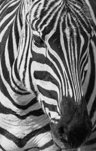 Black&White5