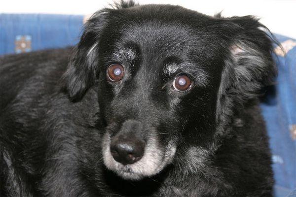 Blacky - 12 Jahre