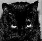 Blacky...