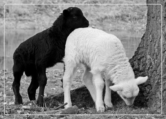 Blacky & Whitey