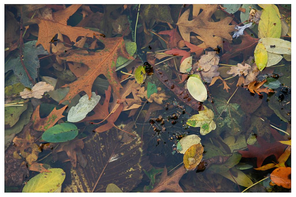 Blätter #01
