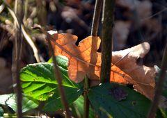 Blätter ....