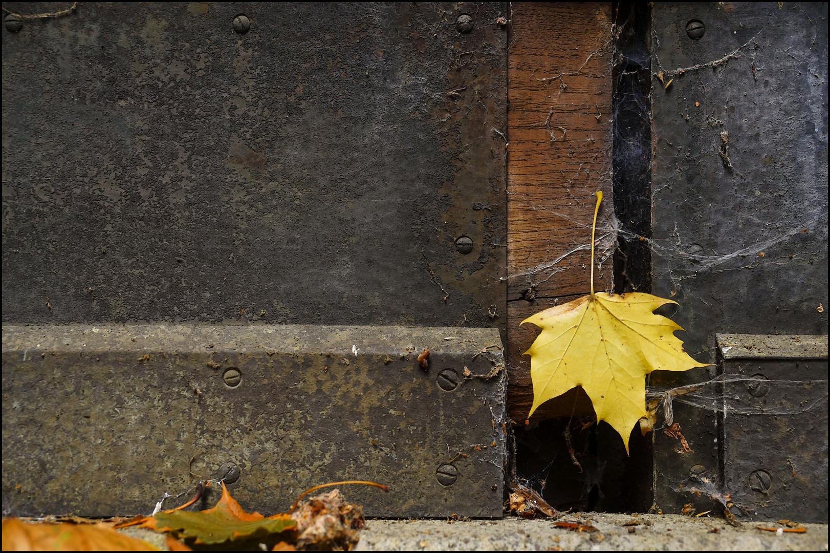 Blätter #3