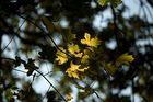 Blätter ...