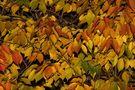 Blätter von Gross Mischa
