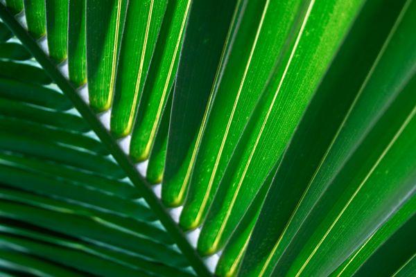 //. Blätter