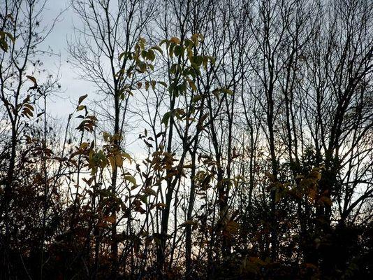 Blätter am Abend