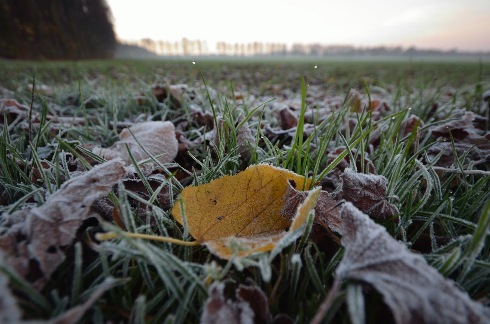 Blätter am Feldrand