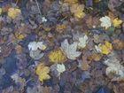 Blätter auf dem Gehweg