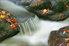 Blätter auf Granit
