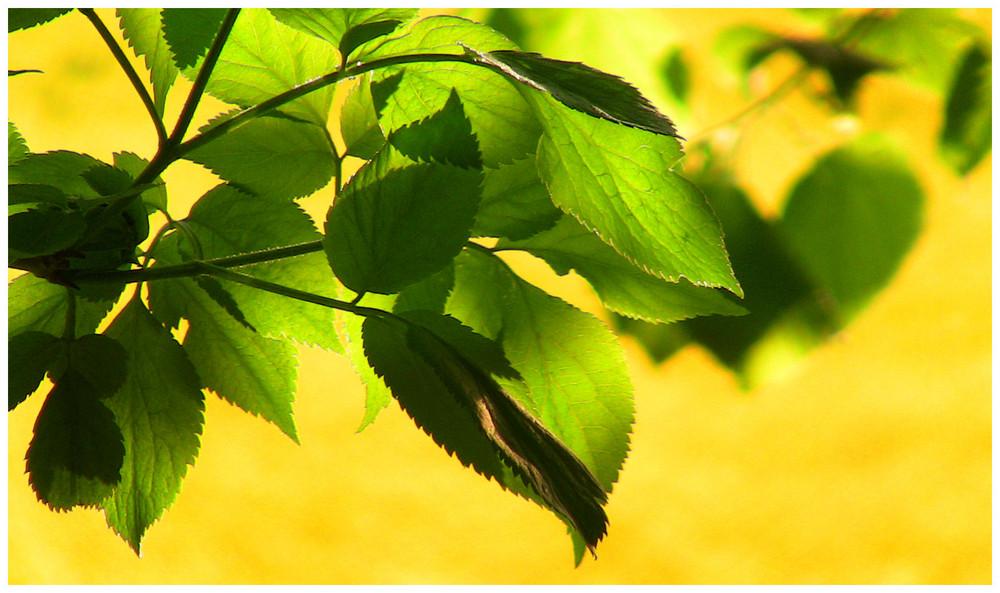 Blätter...