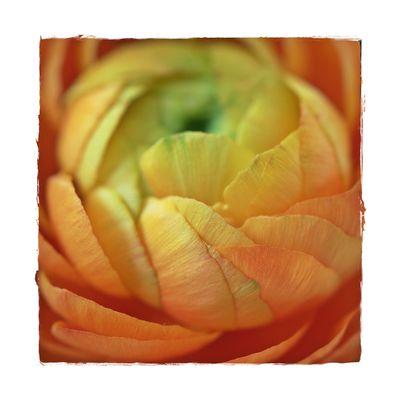 Blätter einer Blüte