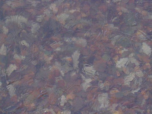 Blätter-Eis