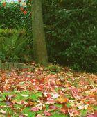 """""""Blätter fallen, fallen wie von weit..."""""""
