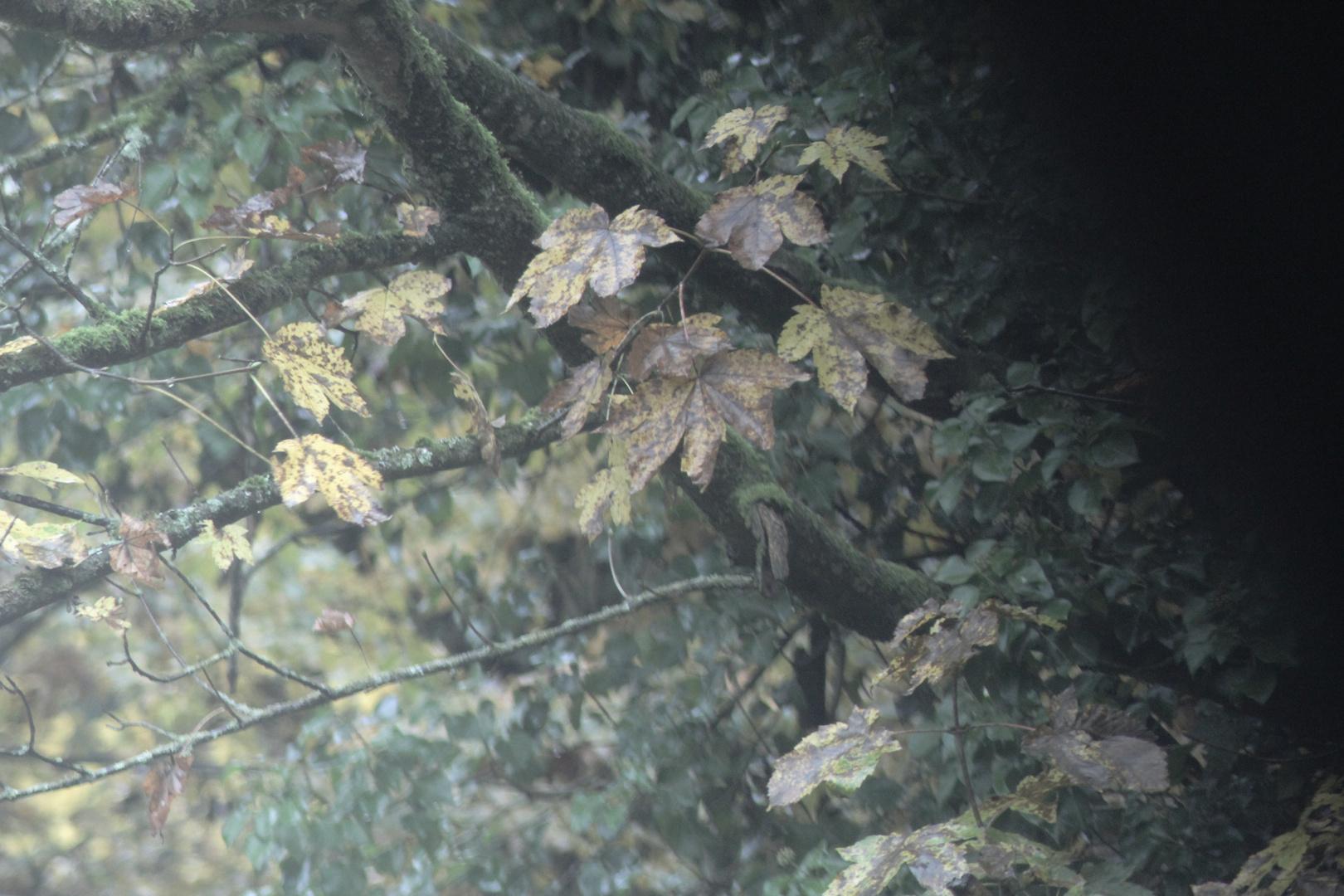 Blätter fallen nun...